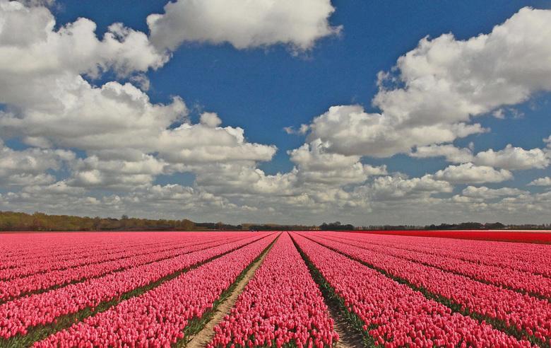 Hollandse luchten - In het groot mooier!<br /> <br /> Deze opname gemaakt in de Noord-Oost-Polder in de buurt van het dorp  Rutten.<br /> <br /> B