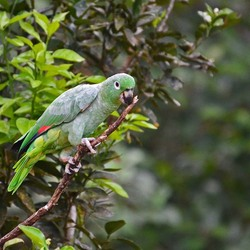 de huis-papegaai