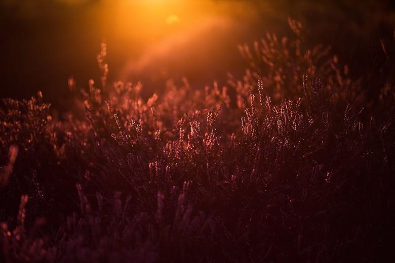 laatste licht - de laatste zonnestralen..<br /> het laatste licht..<br /> priemt door de wolken heen<br /> en zet de aarde in vuur en vlam.<br />