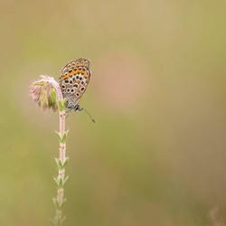 ienie mini vlindertje