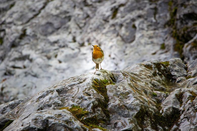 Little bird -