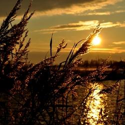 Ondergaande zon tussen de rietpluimen