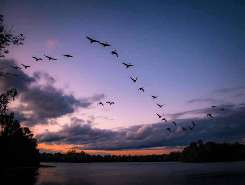 Lucky birds  - Een geluksmomentje na zonsondergang. Deze ganzen maakten het plaatje compleet!