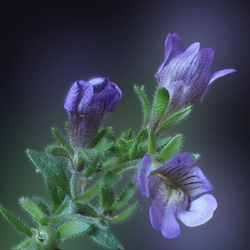 Tiny little flower in the garden