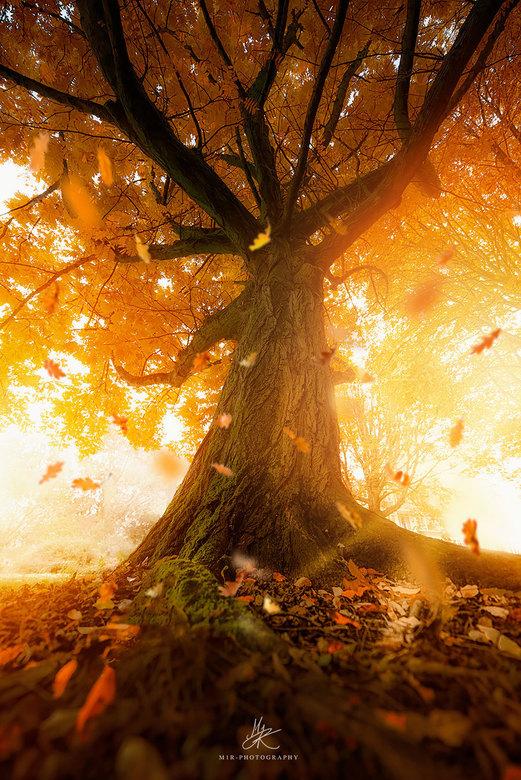 Magic Tree - Ik had dit in gedachten en wou het graag delen met een ieder. Een fijn weekend!