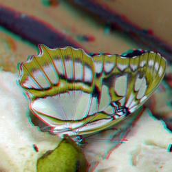 Vlinder Amazonica Blijdorp Zoo 3D anaglyph