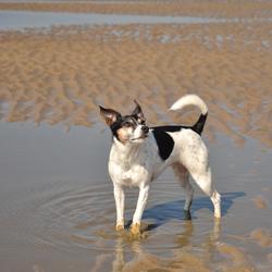 Bobbie at the beach