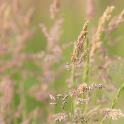 Colours of grass