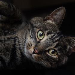 Kat Portret