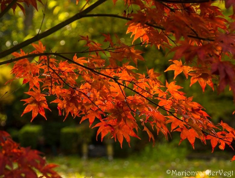 Rood - Hoe mooi is dit? vuurrood !<br /> <br /> Hartelijk dank voor alle reacties, en waardering voor mijn vorige foto&#039;s.<br /> <br /> Fijne