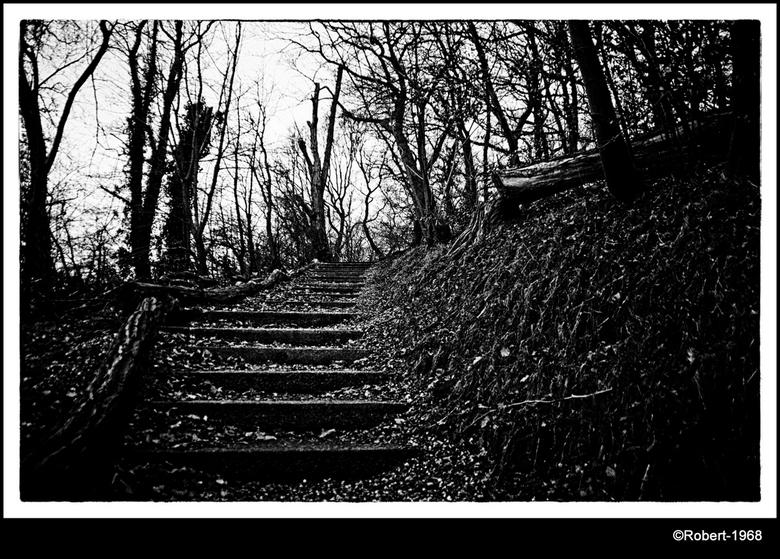Trappetjes bos - Nabij wageningen opweg naar renkum als je op de fiets onder de berg langs (die weg heet ook onderlangs) gaat kom je het trappetjes bo