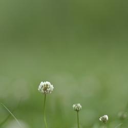 Eenvoudig bloemetje