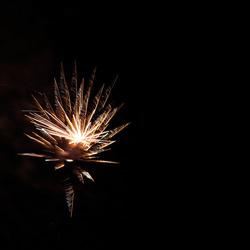 Vuurwerk lotus