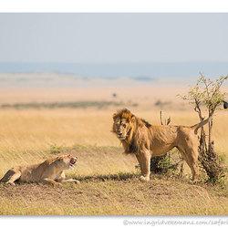 Romancing The Mara