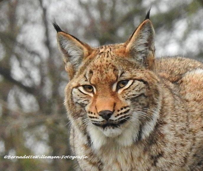 Lynx - Lynx als fotomodel..
