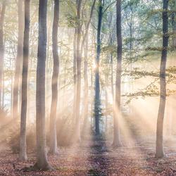 Licht puur natuur
