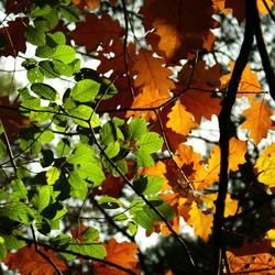 last autumn sun