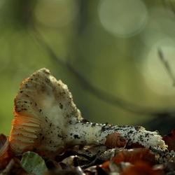 Dè koning der paddenstoelen (3/3)