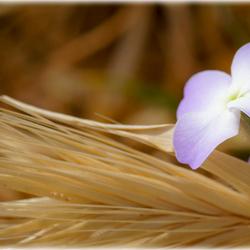 Kreta Flora