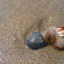 Heremietkreeft op het strand