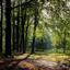 zonnig plekje met beukenbomen