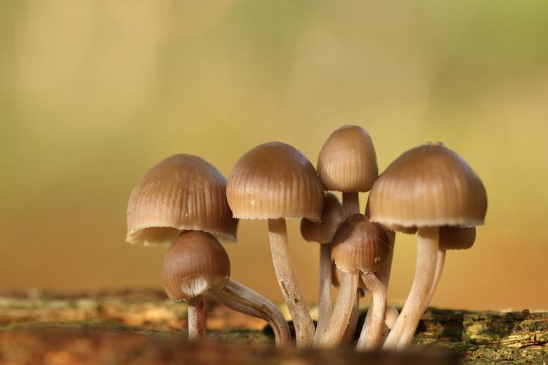 paddenstoelen tijd - paddenstoelen ze blijven me verwonderen bloemetjes van de schimmels.<br /> 3-11-2019.