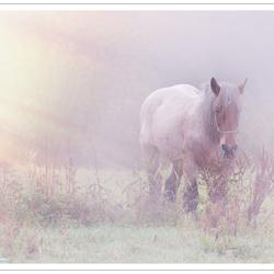 Trekpaard in de mist