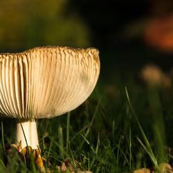 Zo af en toe ontmoet ik ook een paddenstoel