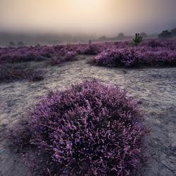 Heide heuvels in de ochtend mist...
