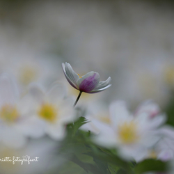 Spring eruit...