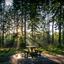 Na een hevige regenbui in het bos