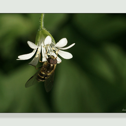 Op zoek naar nectar ........