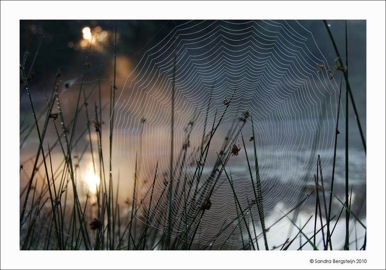 Spin in het web... - ...klaar voor een nieuwe dag.